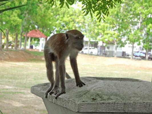 マレーシア20190419 (10)